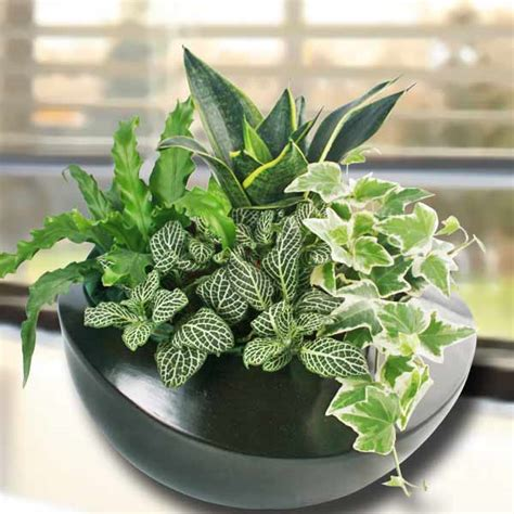 miniature indoor plants singapore indoor plants table garden mini plants