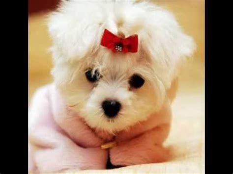 las imagenes mas lindas y tiernas las mascotas mas tiernas del mundo youtube