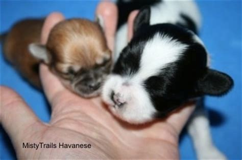 what to feed a 7 week puppy a premature puppy whelping and raising puppies