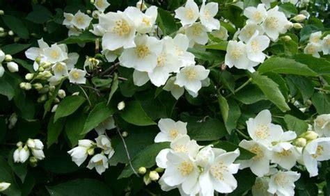 fiori riccione a riccione il fiore offerto dalle fate