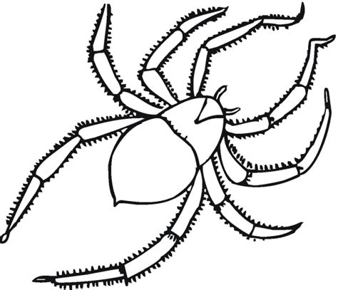 spider outline coloring page spider outline printable clipart best