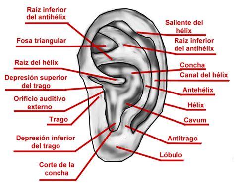 los besos en la oreja y en el cuello es lo mejor que le puede pasar a una mujer partes de la oreja