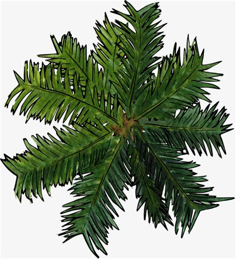 Christmas Tree Decoration by Coconut Tree Top View Top View Green Coconut Tree Png
