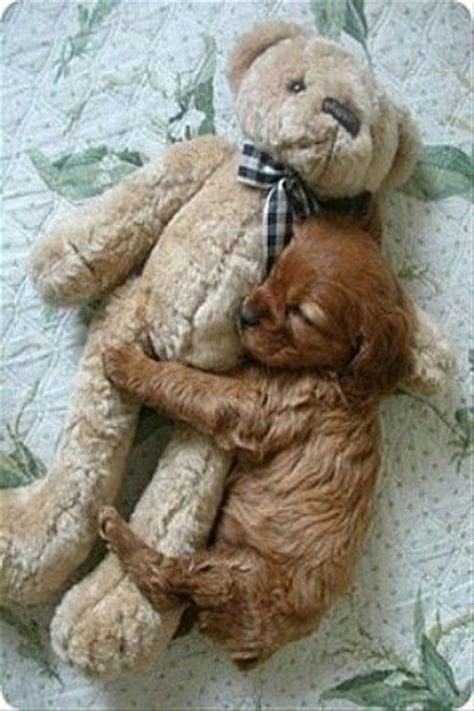 hugging puppies aww so puppy hugging teddy puppies