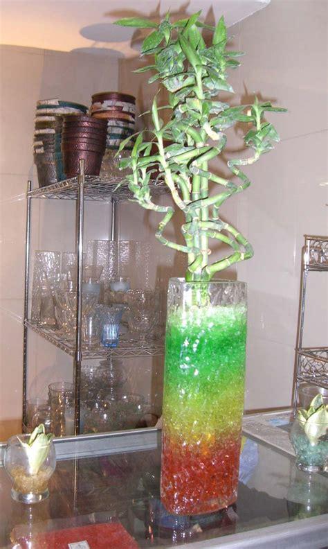 Tempat Jual Tanaman Hidrogel jual tanaman hias air laut tanamanbaru