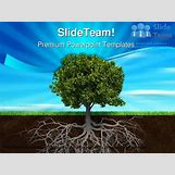 Family Tree Roots Background   1440 x 1080 jpeg 182kB