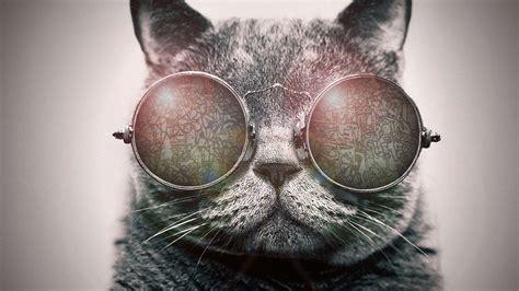 hd wallpapers for desktop shakira download hip cat hd wallpaper download hd wallpapers
