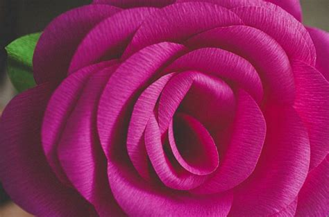 How To Make Crepe Paper Roses - how to make crepe paper roses how to