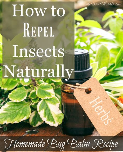 natural remedies and recipes to repel bugs melissa k norris