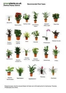 Best Plants For Office With No Windows Ideas Common Desktop Small Office Plants Greenplants Co Uk