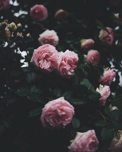 gambar syakira tumblr gambar bunga mawar  rebanas rebanas