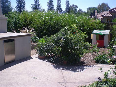 roseville gardening a stewart avocado tree
