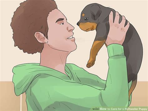 caring for a rottweiler how to care for a rottweiler puppy 14 steps with pictures