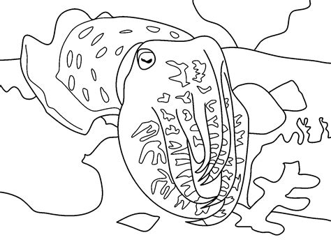 cuttlefish coloring page cuttlefish coloring pages