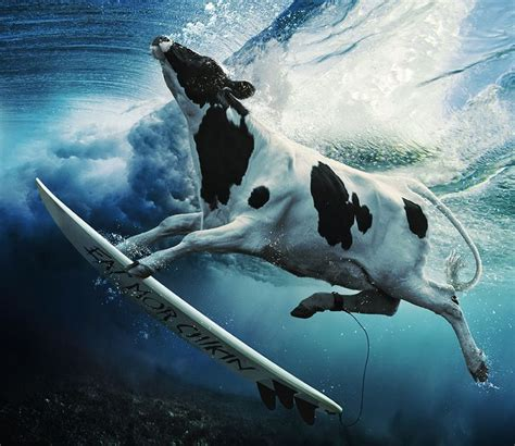 Fil A Cow Calendar 17 Best Images About Chik Fil A Fast Food On