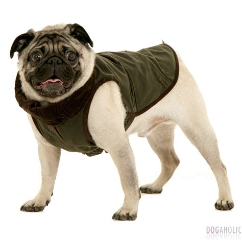 pug coat pattern corduroy quilt my quilts rosewillow s unfinished business new levi s s classic