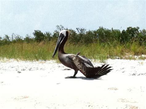 suncoast bird rescue coming to largo park patch