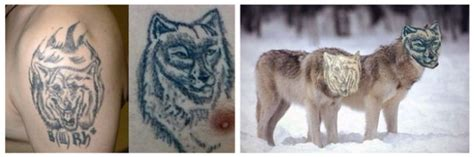 animal tattoo fail when tattoos fail you end up with this 13 pics