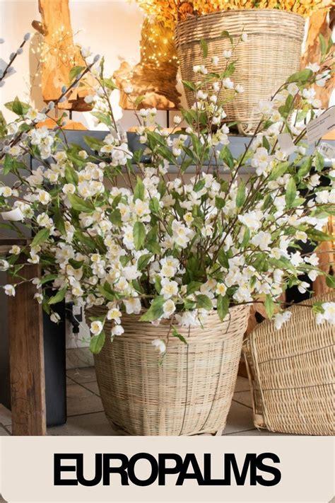 Holen Sie sich den Frühling ins Haus Pflanzen