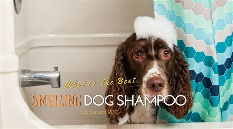 the best smelling grooming products what is the best smelling dog shoo updated 2017 hi5dog