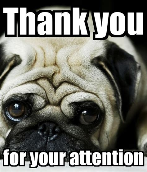 Attention Meme - thank you for your attention animation memes