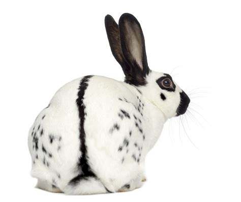 Rabbit And Butterfly Mug 1 spot rabbit