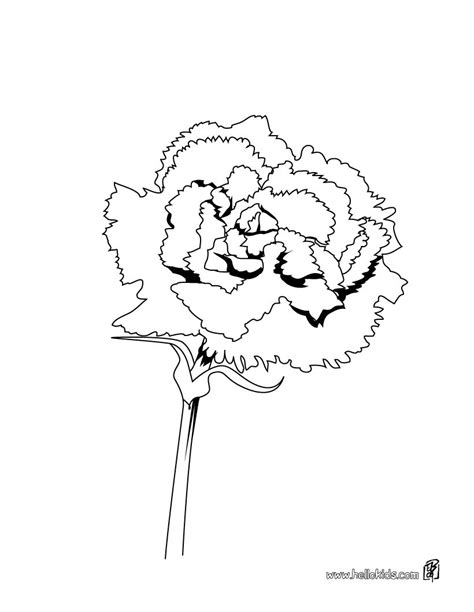 carnation coloring pages hellokids com