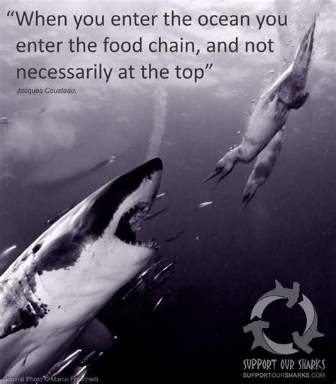 libro the shark in the mejores 242 im 225 genes de sharks en semana del tibur 243 n tiburones y carcharodon carcharias