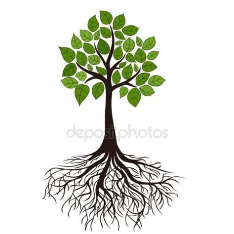 root art design zoetermeer tree roots stock vectors royalty free tree roots