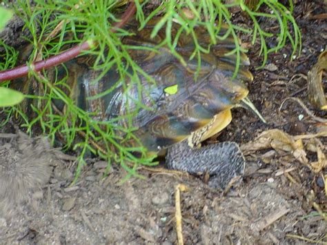 backyard turtles turtle pond backyard home landscapings backyard pond