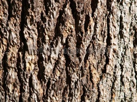 what is a tree trunk covered with 4 letters general knowledge how is the bark of tree formed