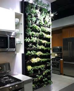 indoor herb garden wall indoor wall herb garden my garden that started indoor