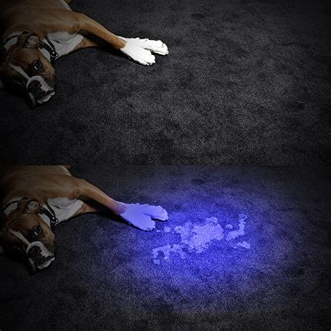 black light mold detection how to get rid of pet odors