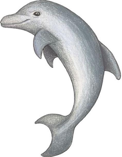 imagenes de animales del mar top imagenes de animales del mar images for pinterest tattoos