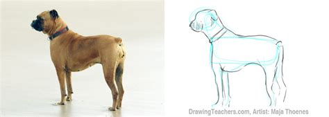 puppy pictures to draw pictures to draw dogs