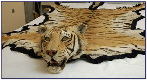 white tiger skin rug real tiger rug rugs home design ideas k49nqokrdd