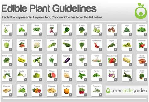 Garden Spacing by Gcg Plant Spacing Guidelines Wheelchair Accessible