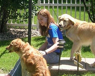 golden retriever attacks golden retriever anxiety attacks method