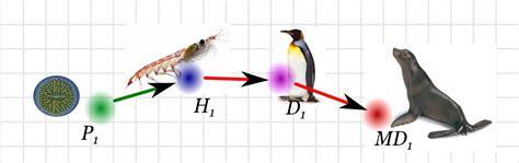 cadena alimenticia krill ciencias de joseleg 9 estructura de la comunidad ecol 211 gica