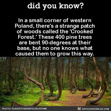 crooked forest in western poland mysterious facts did you know in a small corner of western poland there