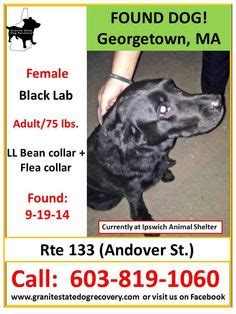 ll bean golden retrievers lost and found dogs goldens labs retrievers on 24 pins