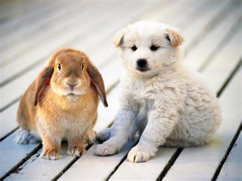puppies and bunnies forum živali mucki kužki konji 2