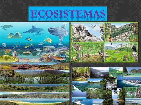 imagenes de ecosistemas naturales calam 233 o ecosistemas enoc