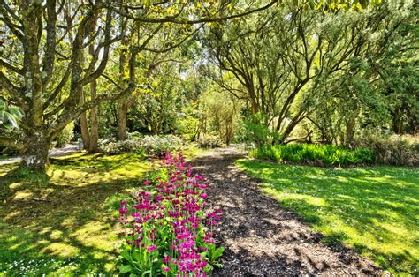 Botanic Gardens View Woods In Logan Botanic Gardens Stock Photo Image 32693222