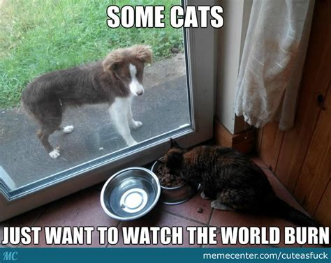 Dog Food Meme - why doesn t the guy with the camera do something those