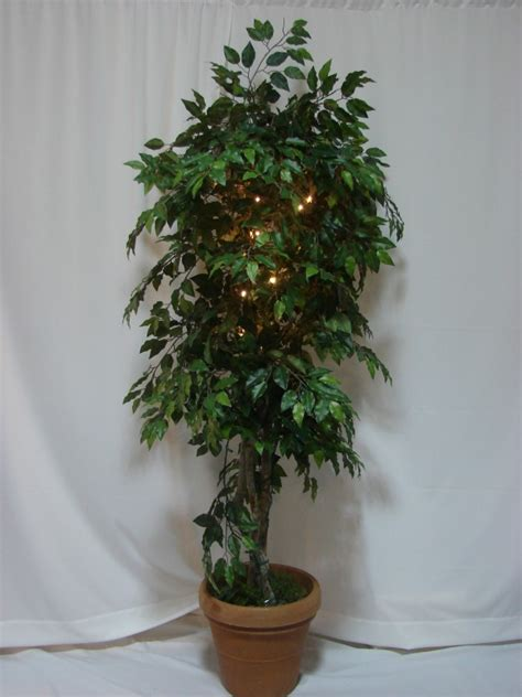 Home Decor Online 7 ficus tree with lights party creations