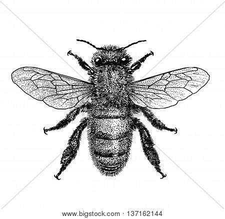 doodle bug bite insect stock photos royalty free insect images insect