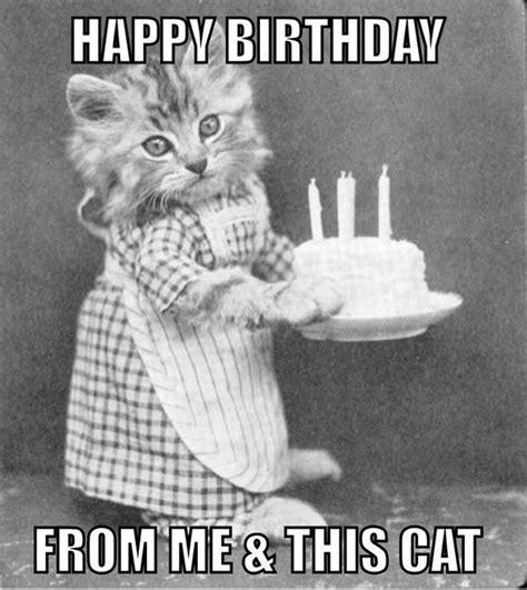 Gay Cat Meme - gay joyeux anniversaire pour les amis avec m 233 m 233 souhaits