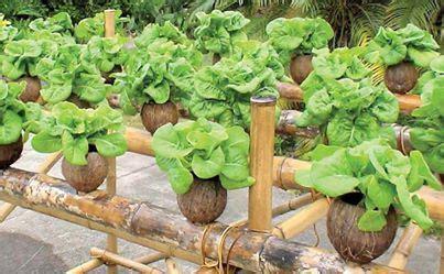 cara membuat nutrisi hidroponik untuk sayuran kenapa hidroponik hidroponik untuk semua