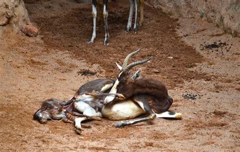 animales vertebrados donde viven como nacen como nacen los animales mamiferos donde viven como nacen
